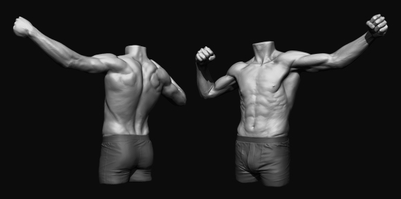 Anatomy_Study_Back_Front