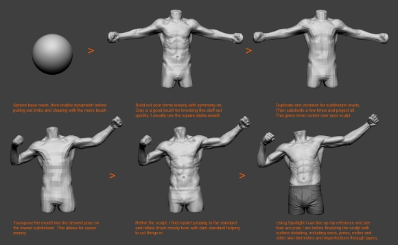 Anatomy_Study_Process